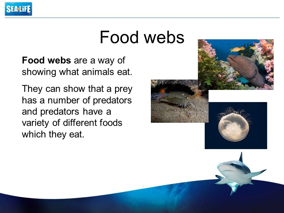 Food webs Food webs are a way of showing what animals eat.