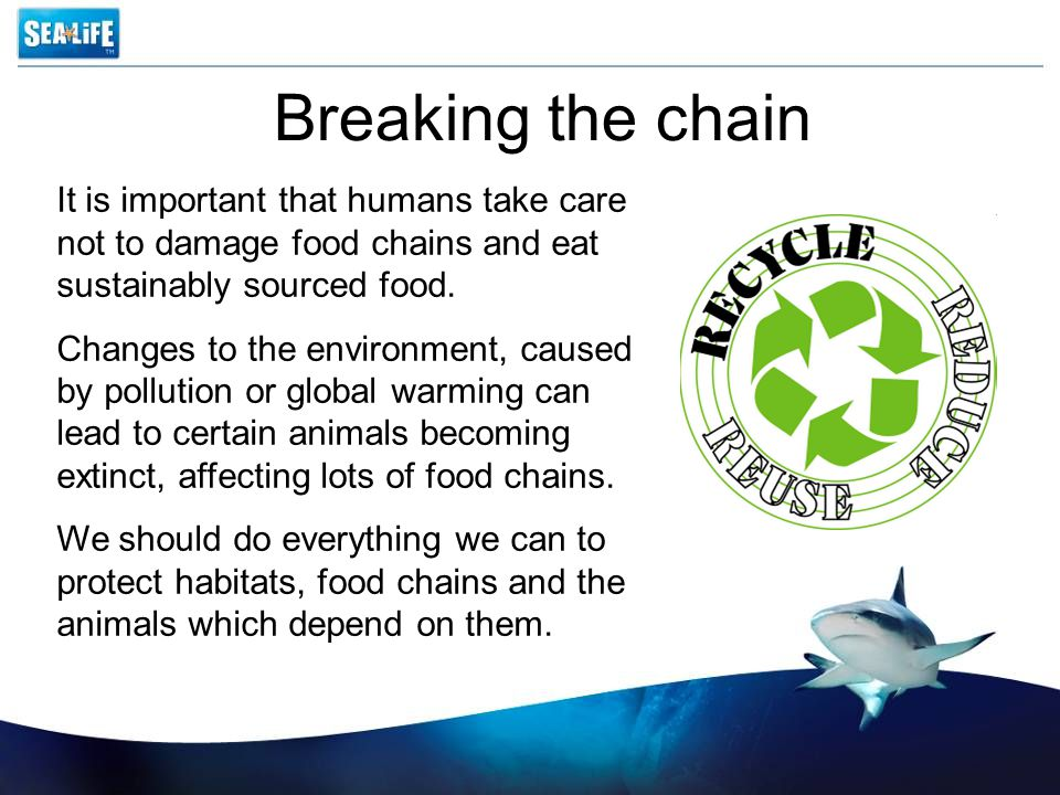 Breaking the chain It is important that humans take care not to damage food chains and eat sustainably sourced food.