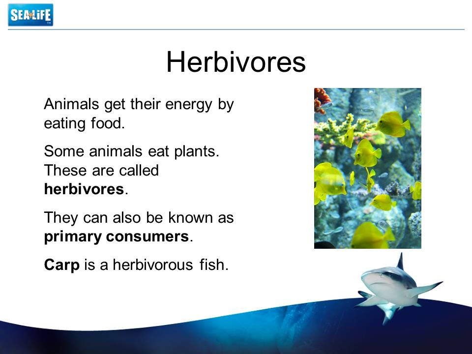 Herbivores Animals get their energy by eating food.