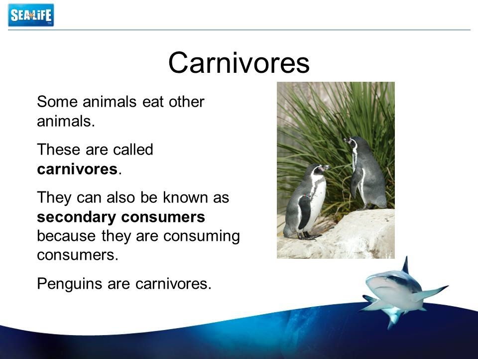Carnivores Some animals eat other animals.