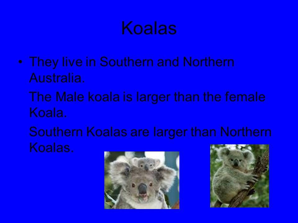 Koalas They live in Southern and Northern Australia.