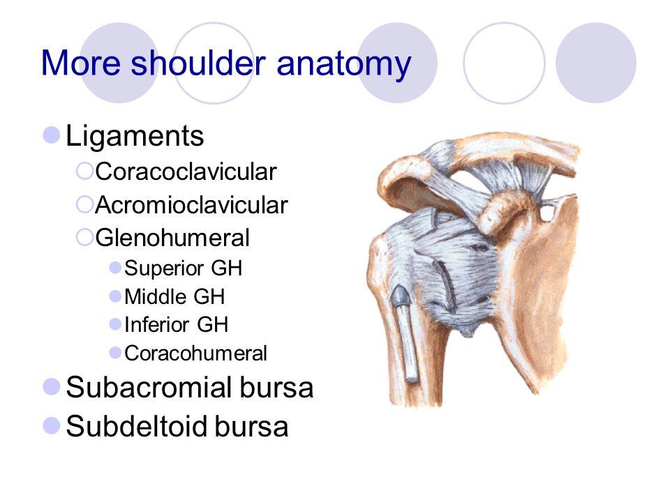 More shoulder anatomy Ligaments Subacromial bursa Subdeltoid bursa