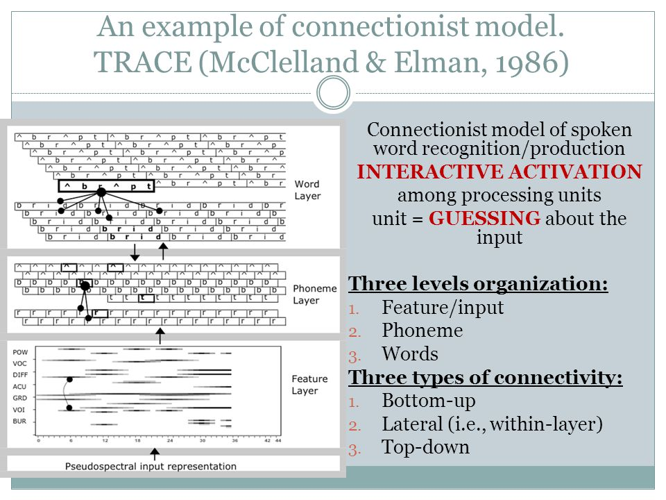 An example of connectionist model. TRACE (McClelland & Elman, 1986)