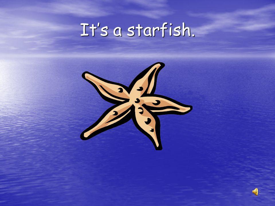It's a starfish.