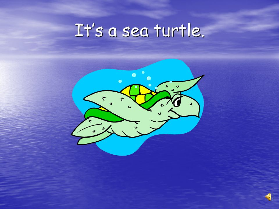 It's a sea turtle.