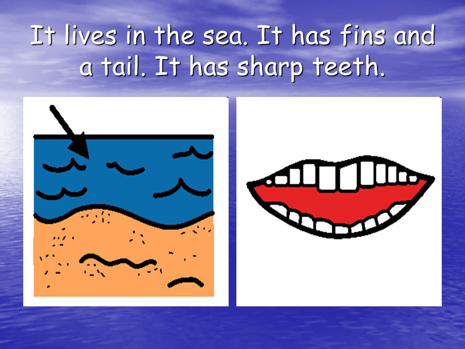 It lives in the sea. It has fins and a tail. It has sharp teeth.