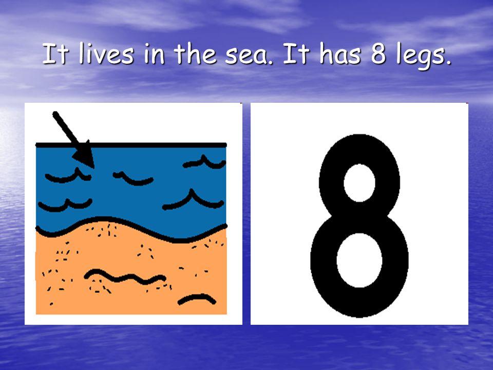 It lives in the sea. It has 8 legs.