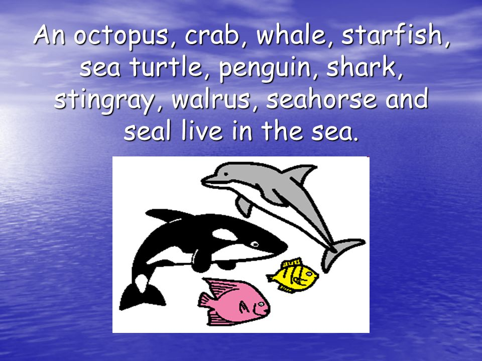An octopus, crab, whale, starfish, sea turtle, penguin, shark, stingray, walrus, seahorse and seal live in the sea.