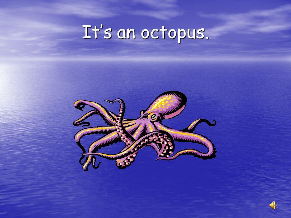 It's an octopus.