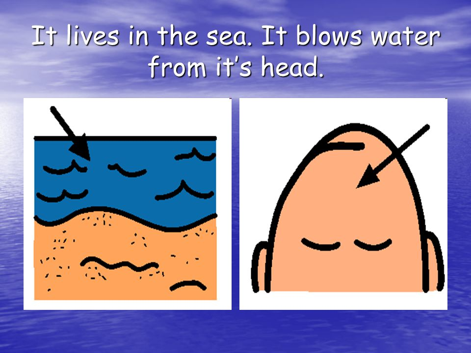 It lives in the sea. It blows water from it's head.