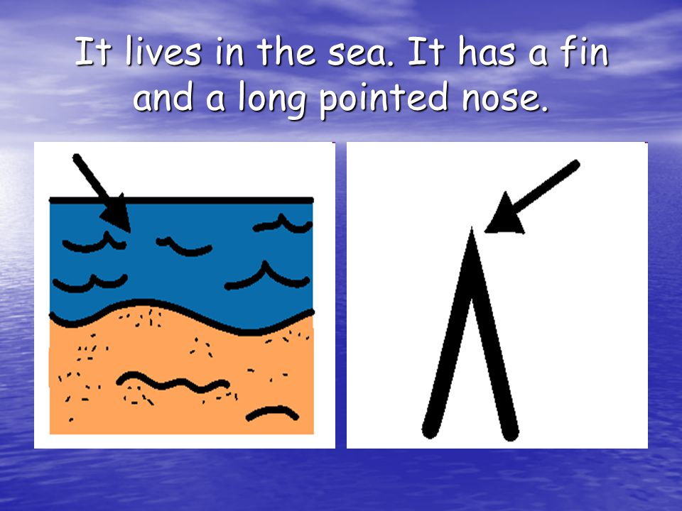 It lives in the sea. It has a fin and a long pointed nose.