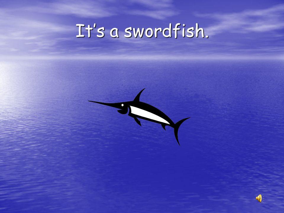 It's a swordfish.