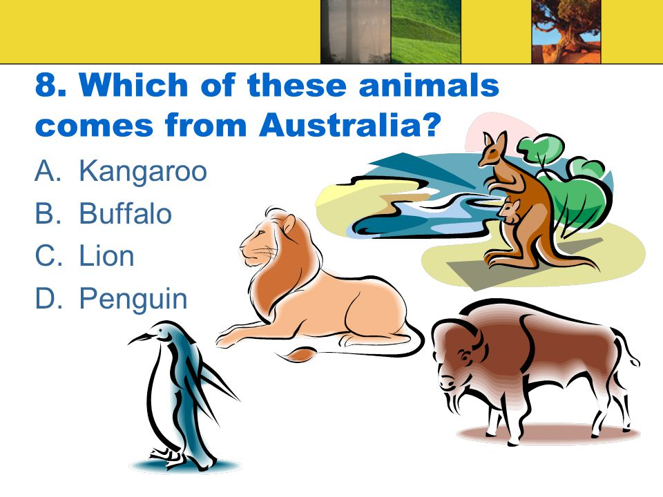 8. Which of these animals comes from Australia