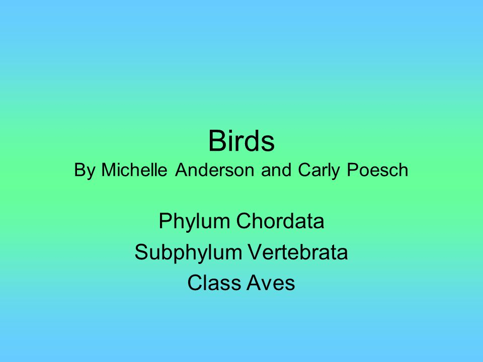 Birds By Michelle Anderson and Carly Poesch