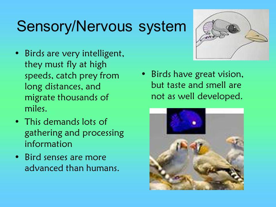 Sensory/Nervous system