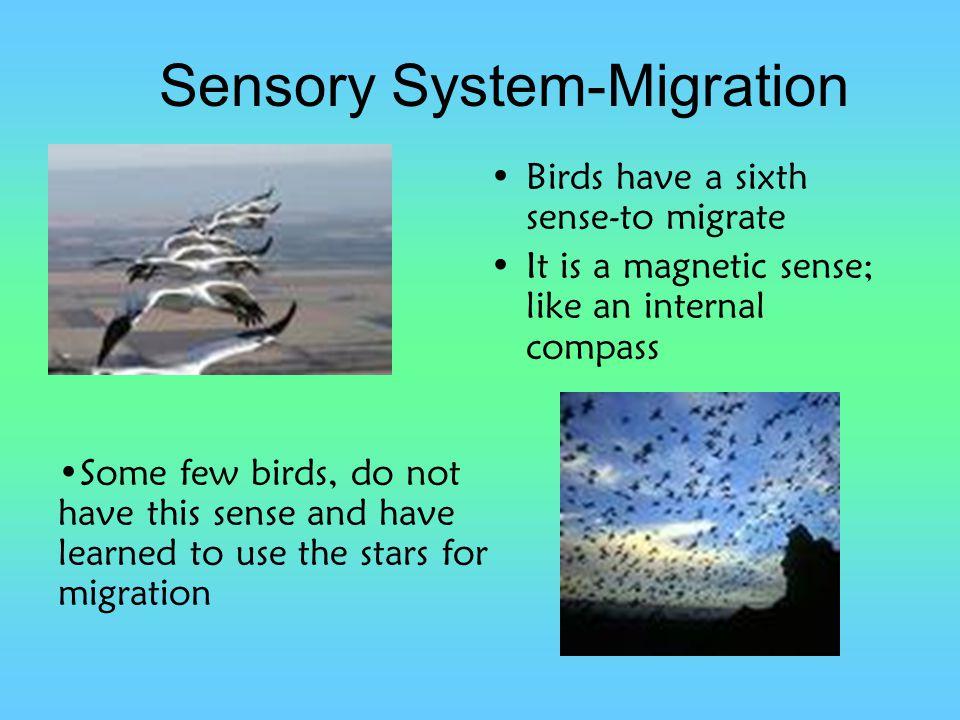 Sensory System-Migration