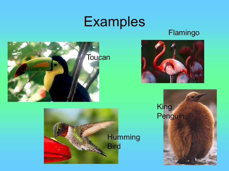 Examples Flamingo Toucan King Penguin Humming Bird