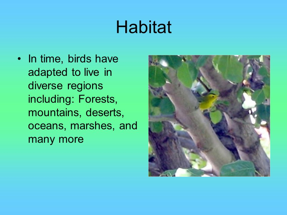 Habitat In time, birds have adapted to live in diverse regions including: Forests, mountains, deserts, oceans, marshes, and many more.