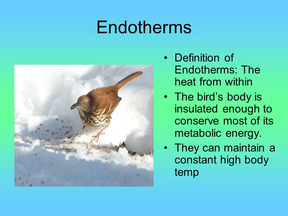 Endotherms Definition of Endotherms: The heat from within