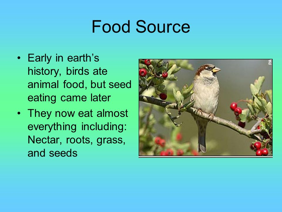 Food Source Early in earth's history, birds ate animal food, but seed eating came later.