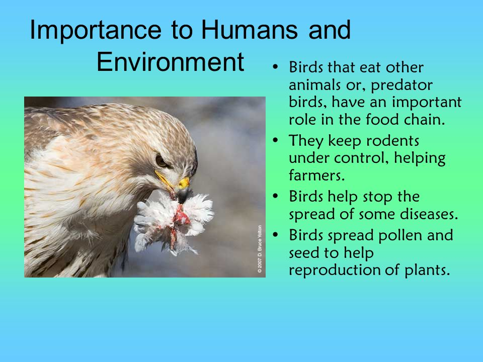 Importance to Humans and Environment