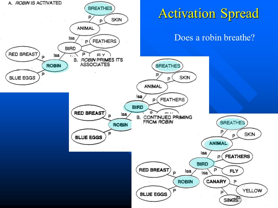 Activation Spread Does a robin breathe