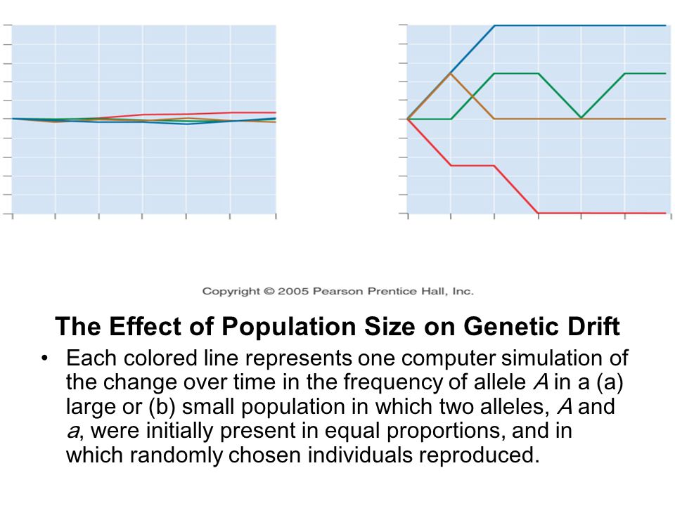 The Effect of Population Size on Genetic Drift