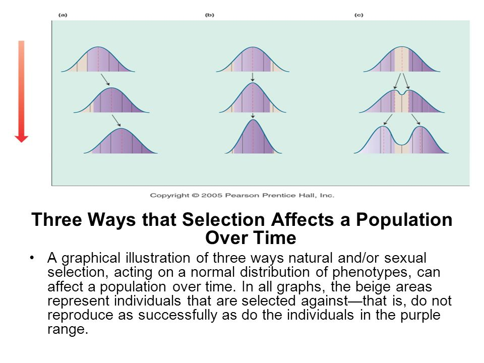 Three Ways that Selection Affects a Population Over Time