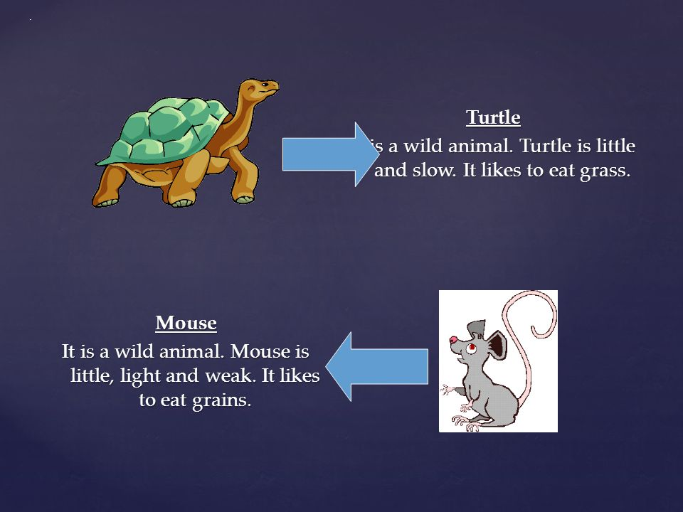 . Turtle It is a wild animal. Turtle is little and slow. It likes to eat grass.