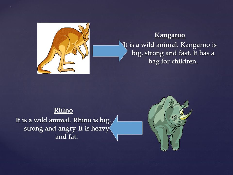 . Kangaroo It is a wild animal. Kangaroo is big, strong and fast. It has a bag for children.