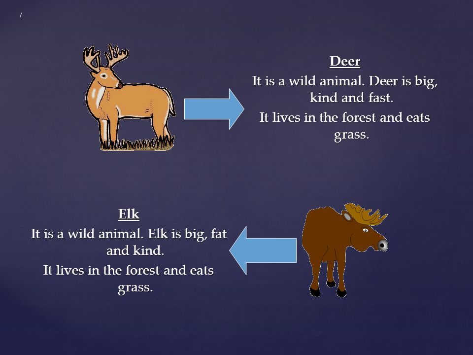 / Deer It is a wild animal. Deer is big, kind and fast. It lives in the forest and eats grass.