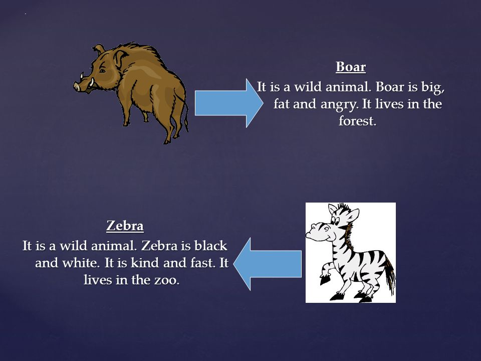 . Boar It is a wild animal. Boar is big, fat and angry. It lives in the forest.