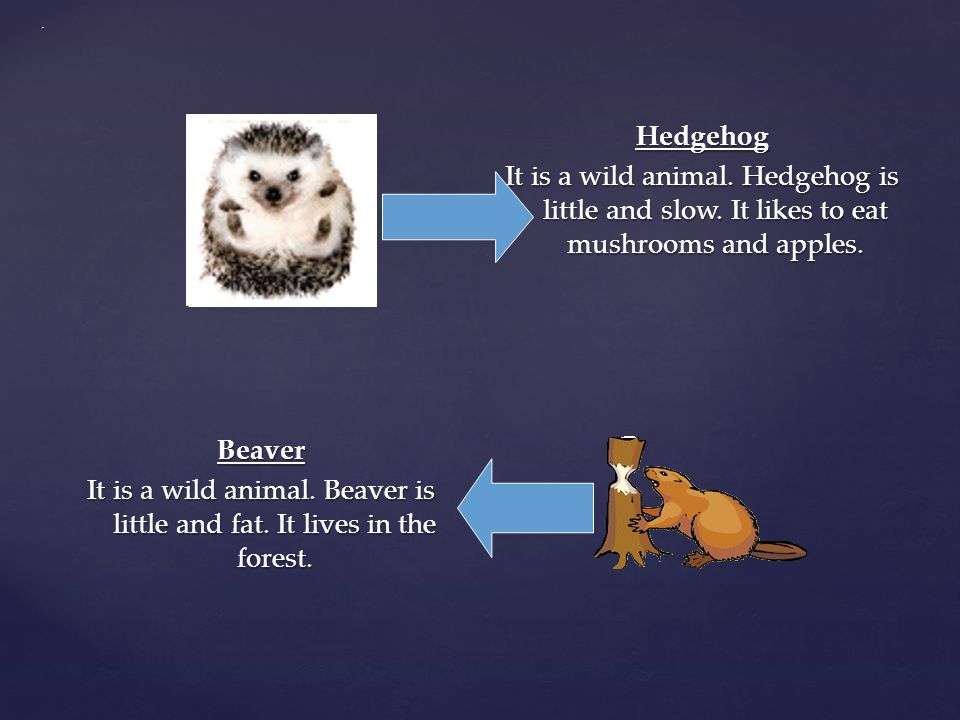 . Hedgehog It is a wild animal. Hedgehog is little and slow. It likes to eat mushrooms and apples.