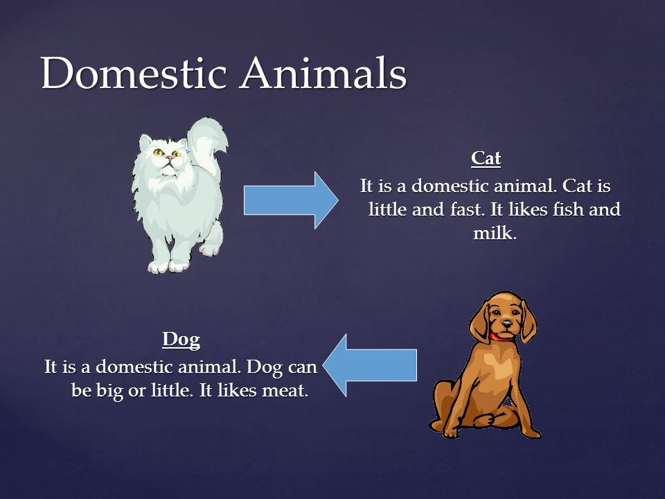 Dog It is a domestic animal. Dog can be big or little. It likes meat.