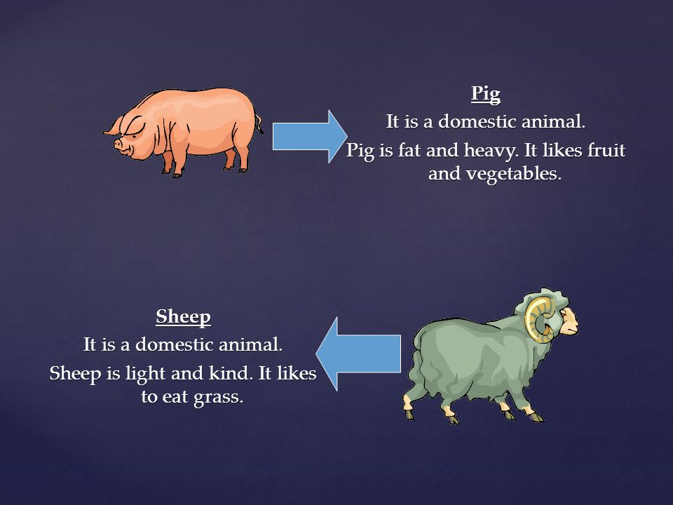 Pig It is a domestic animal. Pig is fat and heavy