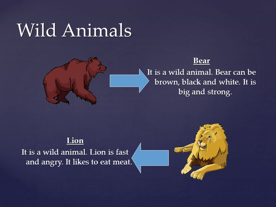 Wild Animals Bear It is a wild animal. Bear can be brown, black and white. It is big and strong.