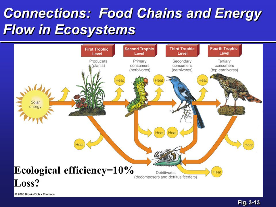 ecosystem and food web