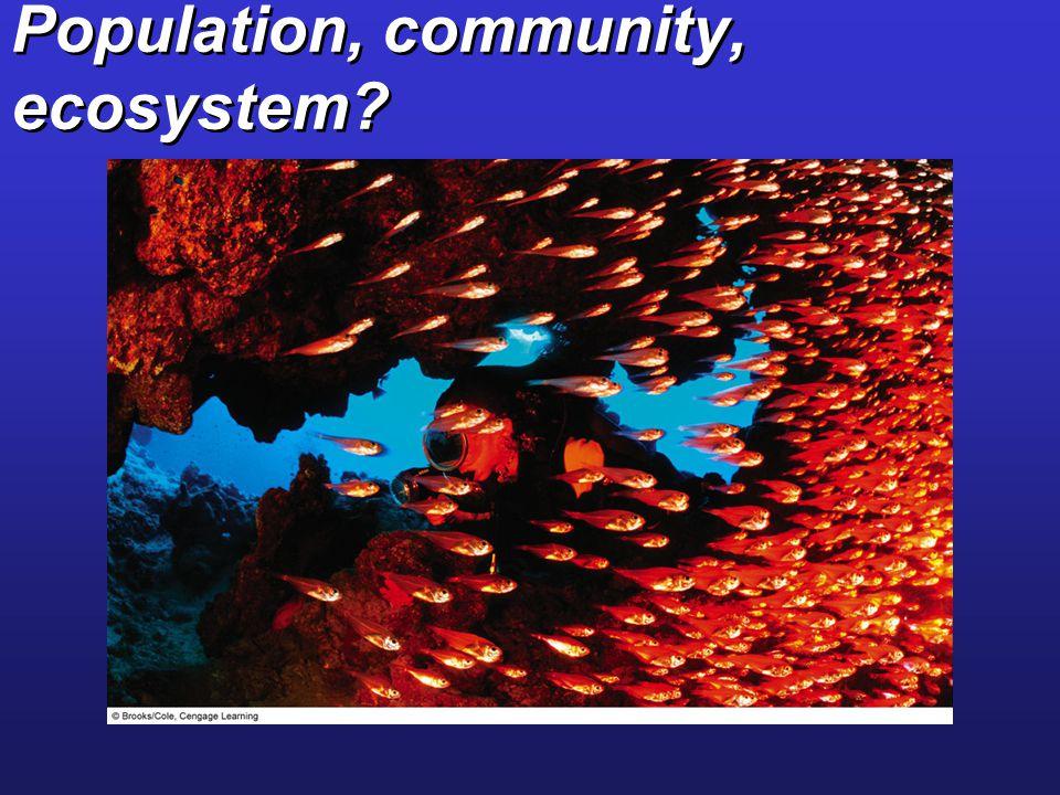 Population, community, ecosystem