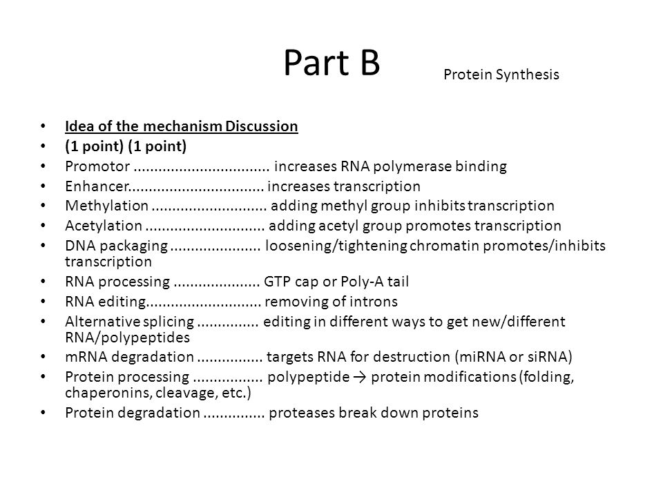 Part B Protein Synthesis Idea of the mechanism Discussion
