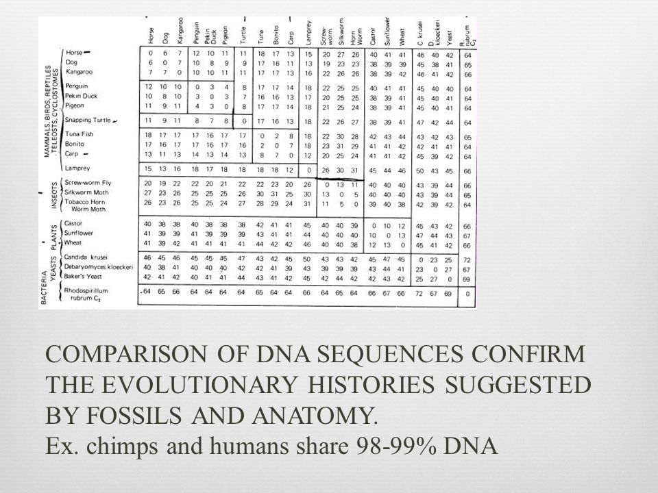 COMPARISON OF DNA SEQUENCES CONFIRM THE EVOLUTIONARY HISTORIES SUGGESTED BY FOSSILS AND ANATOMY.