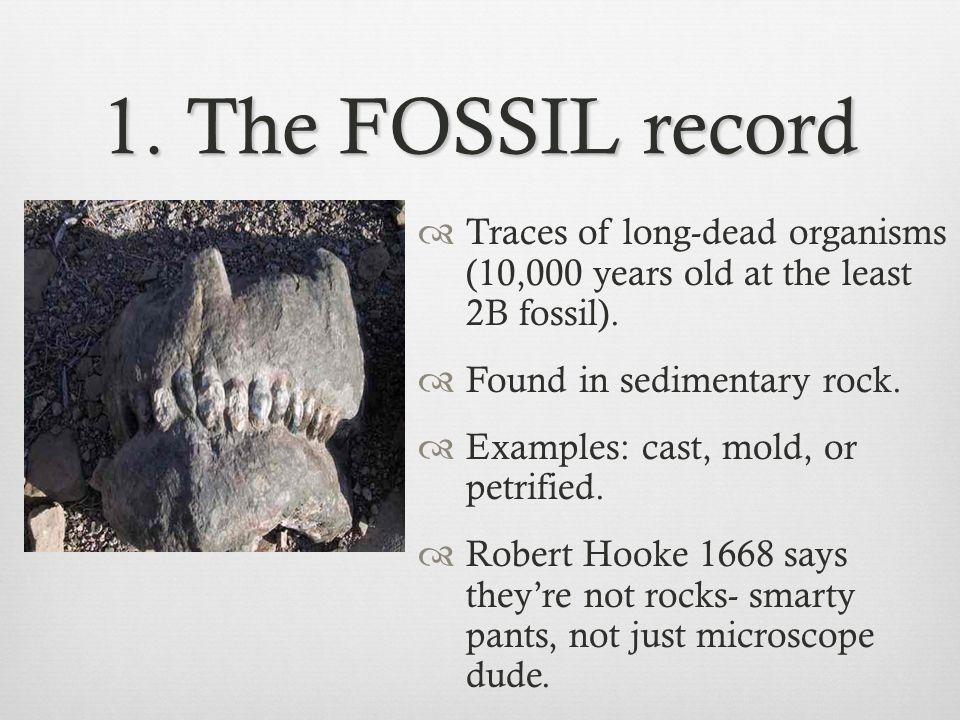1. The FOSSIL record Traces of long-dead organisms (10,000 years old at the least 2B fossil). Found in sedimentary rock.