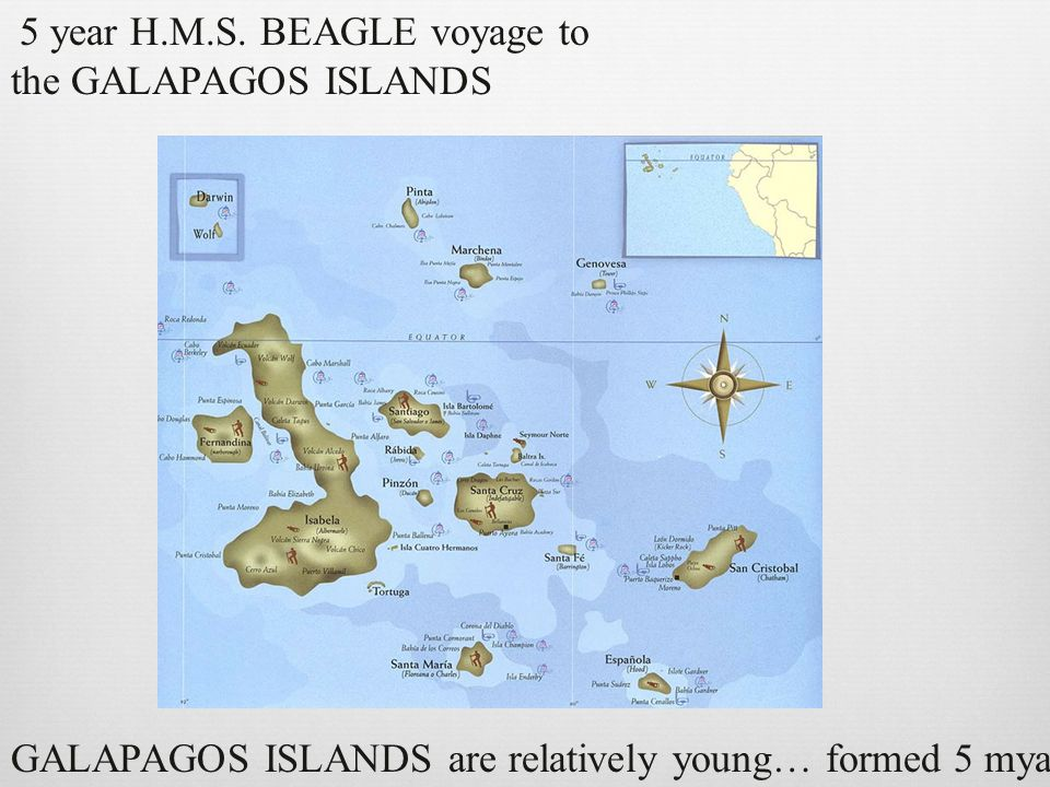 GALAPAGOS ISLANDS are relatively young… formed 5 mya