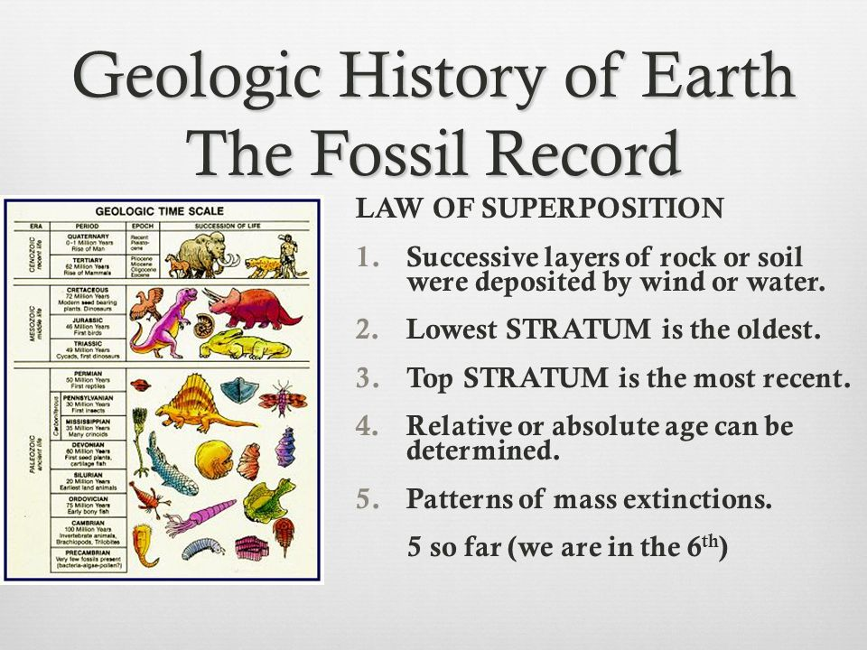 Geologic History of Earth The Fossil Record