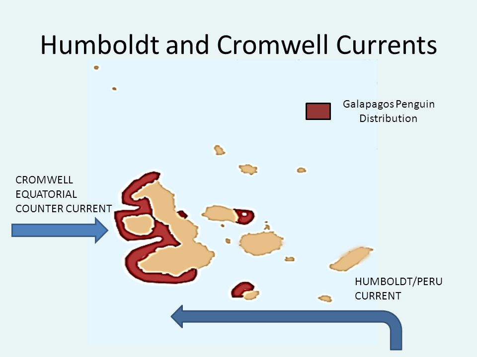 Humboldt and Cromwell Currents