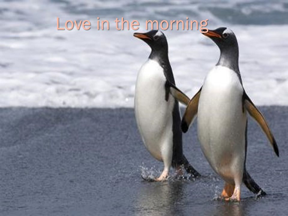 Love in the morning
