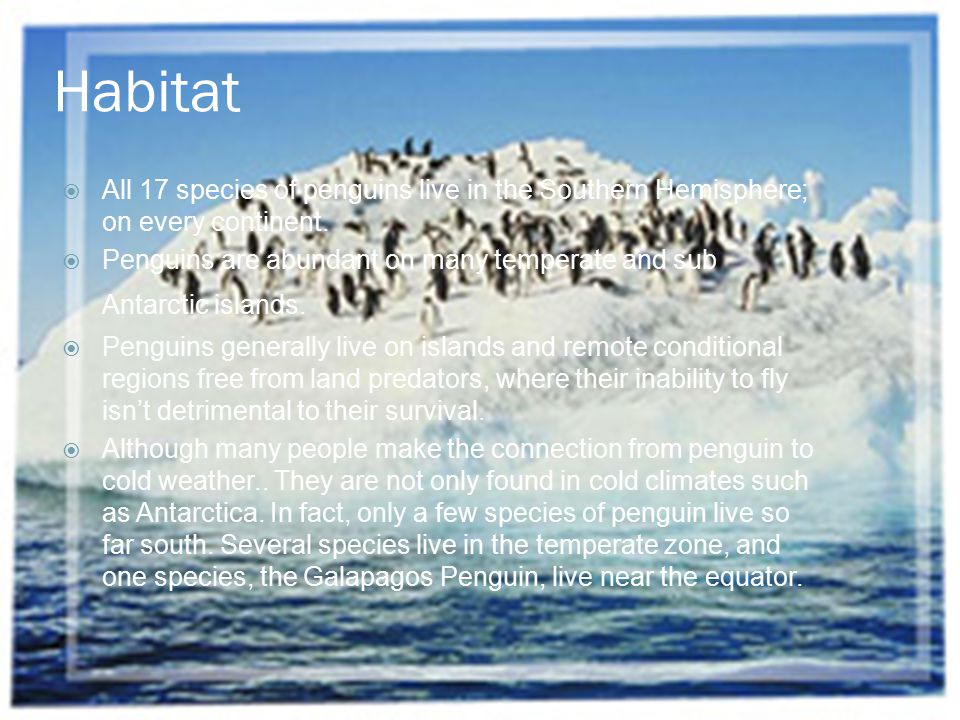 Habitat All 17 species of penguins live in the Southern Hemisphere; on every continent.