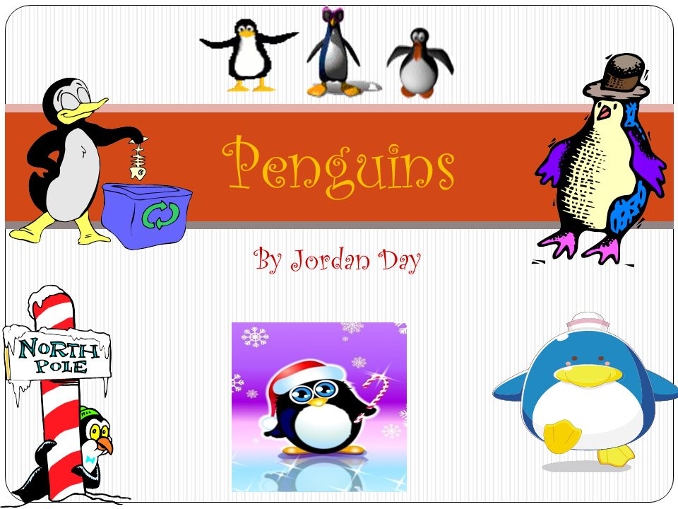 Penguins By Jordan Day