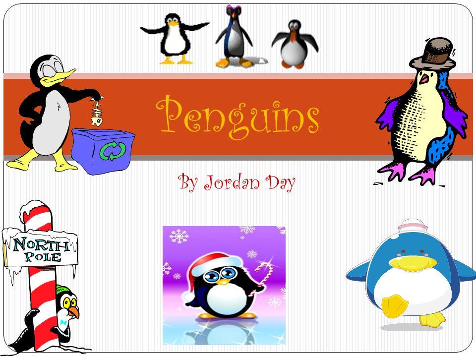 Penguins By Jordan Day