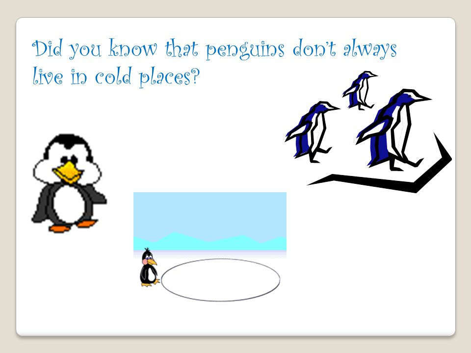 Did you know that penguins don't always live in cold places
