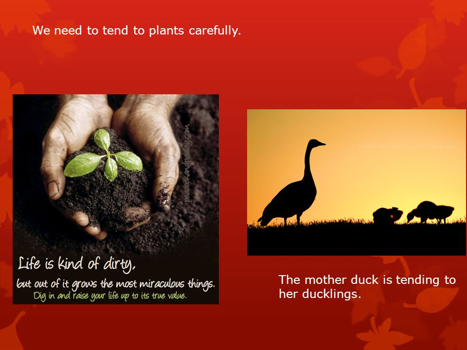 We need to tend to plants carefully.
